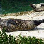 et bain de soleil pour les phoques