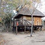 Marc's Treehouse Lodge Photo