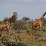 Photo of Diani Tours and Safaris - Private Day Tours