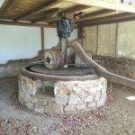 Photo de Cretan Olive Oil Farm