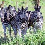Foto de Heritage Day Tours & Safaris