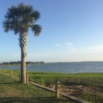 Great palmetto trees
