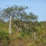 Dry tropical forest - though quite green after El Nino rains