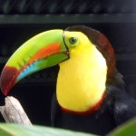 Photo of Toucan Rescue Ranch