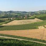 Photo de Red Wine Camere