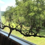 Vine in window