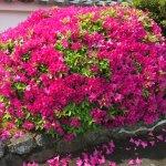 Photo of Okochi Sanso Garden