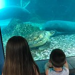 2 manatees, a turtle, and my kids