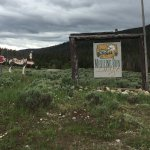 Medicine Bow Lodge照片