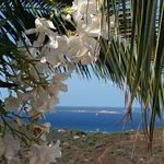 Foto de Hotel Micalosu