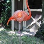 this flamingo was beautiful
