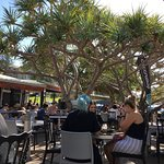 Coffee Cat on Kings Beach의 사진
