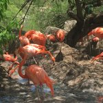 Foto de Gladys Porter Zoo