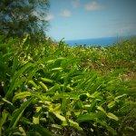 the lush vegetation