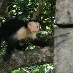 Foto de The Congo Trail Canopy Tour