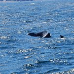 Pod of pilot whales - July 6, 2017
