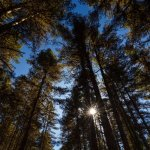 A walk into the pine woods of Phobjikha valley