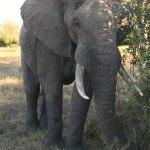 Foto Umkumbe Safari Lodge