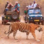 "See wildlife with ""Maharashtra Wild Trails"" journey"