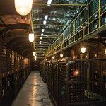 Wine bottle cellar.