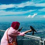 Friendly Jackdaws birds
