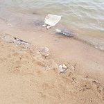 Photo of Wind Beach Resort