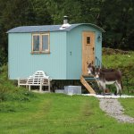 Your shepherd hut, with donkeys for company