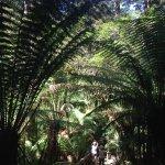 Photo of Tree Top Walk