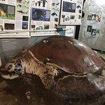 Foto de Sea Turtle Conservancy