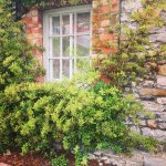 Foto de Newbridge House