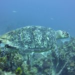 A fellow diver...