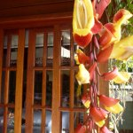 Beautiful tropical flowers make a 'living curtain' in this chalet.