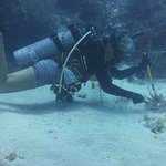 Jenny cutting the spines from our Lion Fish.
