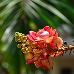 Foto de The Leela Goa