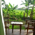 Photo of Rice Villa