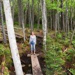 walk through the forest
