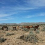 See the WILD HORSES on our Private Ride