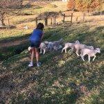 Ardmore Guest Farm Foto