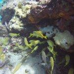 Beautiful aquatic life!