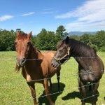 Fire Mountain Inn (Horses on Property)