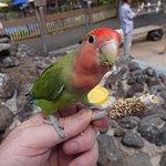 Birdy getting a snack!