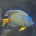 fabulous fish in the coral gardens of Belize