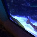 More aquarium pics.