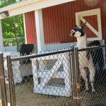 Foto de Lake Superior Zoo & Zoological Society