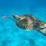 Similan Islands National Park Foto