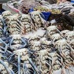 Photo of Dubai Deira Fish Souk