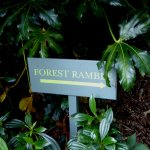 Check out the forest ramble
