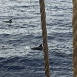 Accidentally spotted a group of bottlenose dolphins