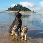 Three very happy dogs on causeway to St Michael's Mount outside the hotel.