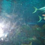 Blue Planet Aquarium